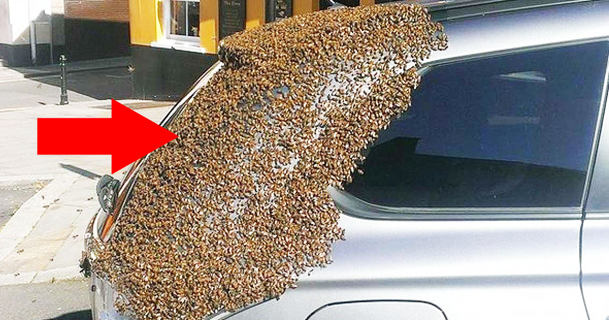 20,000 Bees Followed Her Car For Two Days Straight Until They Found What Was In The Trunk
