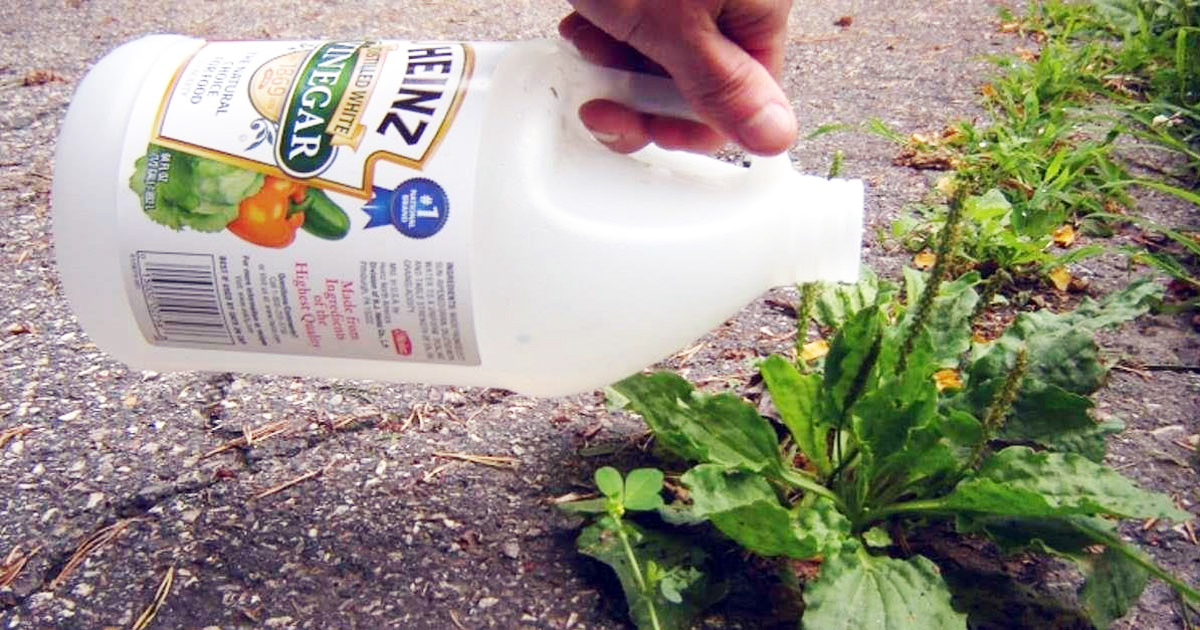 Try These 9 Fantastic All-Natural Weed Killing Tips From An Expert