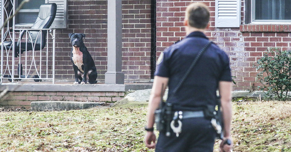 Police Find Pit Bull With Blood Spattering Its Chest And Then Sadly Realize What's Happened