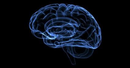 你的大脑像什么?